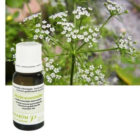 Aceite esencial de Ajowan 10ml - Aromaterapia Pranarom