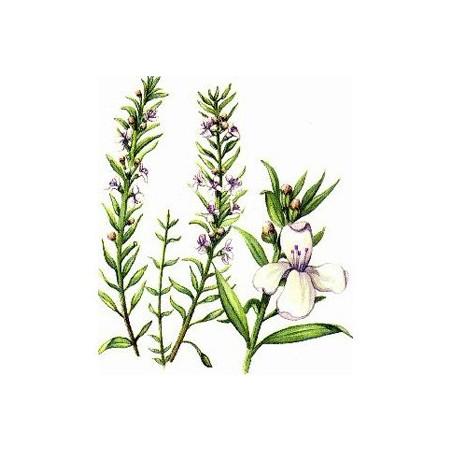 Sarriette des montagnes Huile essentielle 5ml - Aromathérapie Pranarom